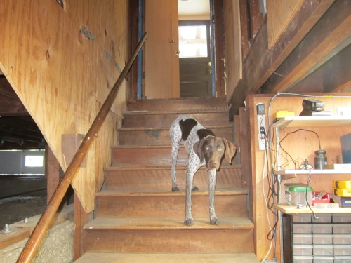 My Client wants to remove a major load bearing wall. His dog Io is concerned that the foundation is adequate to support the posts.